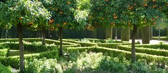 walking beside the orange trees at córdoba s alcazar buckettripper