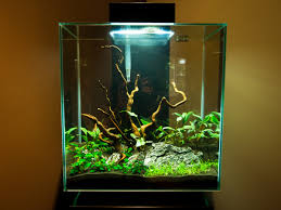 including an algae eater for 46l fluval edge fish