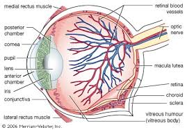 Finding Your Blind Spot In Your Eye Blind Spot Anatomy Britannica Com