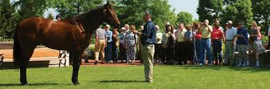 Kentucky how far can a horse travel in a day images Horse farm tours in the horse capital of the world lexington jpg