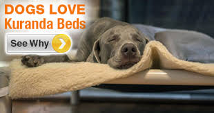 Elevated Dog Beds For Large Dogs Testimonials Easy To Clean Kuranda Dog Beds