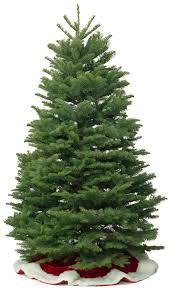noble fir christmas tree kirk company