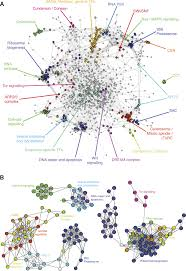 Cell Cycle Concept Map A Map Of Directional Genetic Interactions In A Metazoan Cell Elife