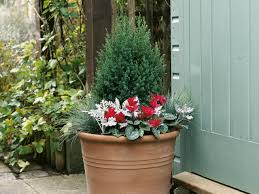 plant a fall container garden hgtv