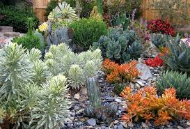 succulents in unusual containers landscape contemporary with