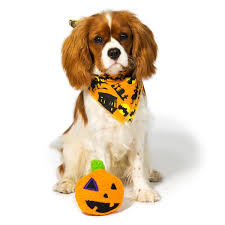 dog halloween costumes u0026 accessories akc shop