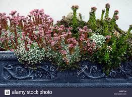 Rock Garden Succulents Succulents Garden Design Rustic With Desert Landscaping Succulent