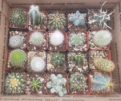 pots for succulents for sale 2