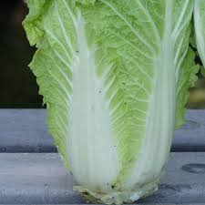 cabbage china cabbage china express vegetable seed white seed c0