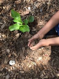 native plant project nativeplantproject hashtag on twitter