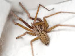 what attracts spiders to your house panther pest control