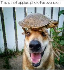 Animal Memes - 20 animal memes that will instantly cure your bad day i can has