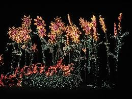 Bellevue Botanical Garden Lights Holiday Activities The Whole Family Will Enjoy In Washington State