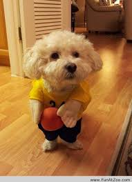 Funny Halloween Animal Costumes 35 Halloween Costumes Dogs Images Pet