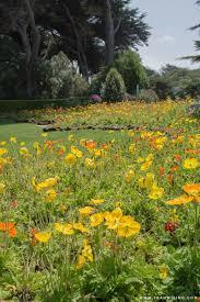 San Francisco Flower Garden by Wilhelmina Tulip Garden In San Francisco California