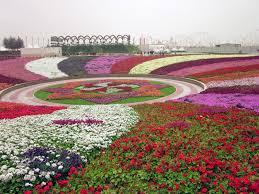 dubai miracle garden largest flower garden in the world cute