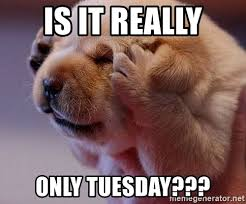 Tuesday Meme - is it really only tuesday dog covering ears meme generator