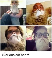 Cat Beard Meme - glorious cat beard beard meme on me me