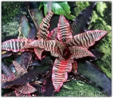 indoor bromeliad house plant for dark room gardening