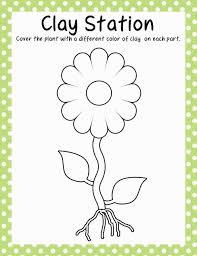 parts of a plant kindergarten worksheet weeklyplanner website