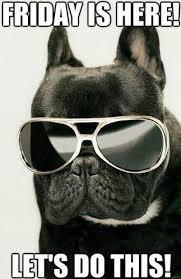 Finally Friday Meme - 33 animals wearing glasses finally friday tgif and humor