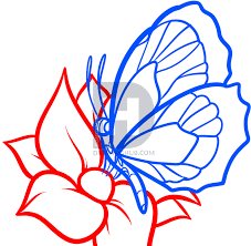 how to draw a butterfly on a flower butterfly and flower by