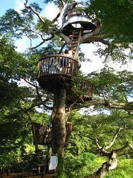 three house kobayashi tree house master