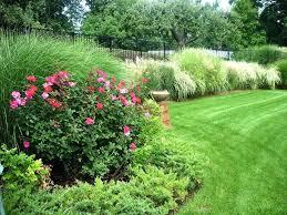 deer resistant landscaping ideas ornamental grass garden ideas pool