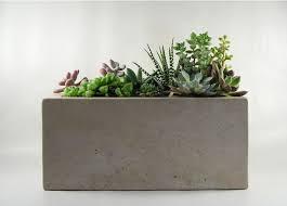 Rectangular Succulent Planter by Rectangular Concrete Planter Concrete And Planters
