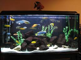 How To Decorate A Stone by How To Decorate A Fish Tank
