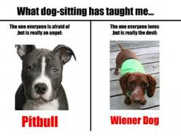 Wiener Dog Meme - what dog sitting has taught me the one everyone is afraid of the one