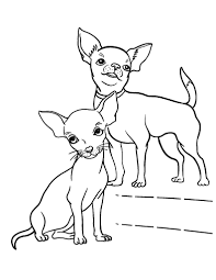 coloring pages chihuahua puppies printable chihuahua coloring page free pdf download at http