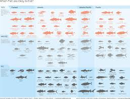 which fish are okay to eat u2014 information is beautiful