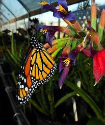 Butterfly Festival in Jasper