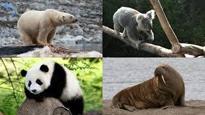 images of animals qygjxz