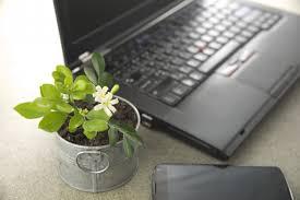 plantes bureau les meilleures plantes de bureau la pause jardin