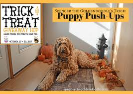 goldendoodle puppy treats trick or treat giveaway hop how to do puppy push ups spencer