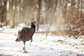 5 surprising origins of common bird names oxfordwords blog
