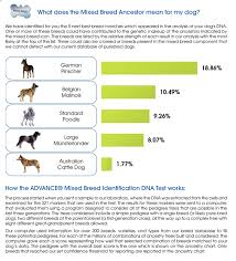 belgian malinois weight at 8 months dna testing for mixed breed dogs