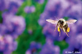 Life Of A Flower - the secret life of bumblebees texas master gardener association