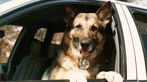 Burying Your Dog In The Backyard Legality New Illinois Law Keeps Police Dogs With Partner Officers Chicago