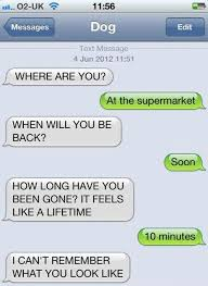 Best 25 Text Message Meme - texts from dog www meme lol com funny gifs pinterest meme