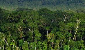 canopy amazon canopy in the amazon rainforest amazon the beautiful pinterest