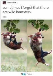 Cuteness Overload Meme - cuteness overload meme by superilluminati memedroid