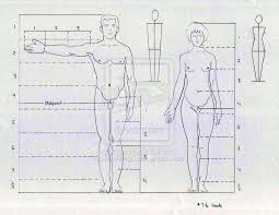 human body proportions worksheet human body proportion by