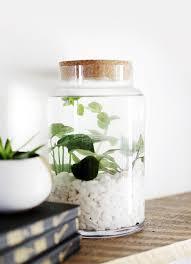 best 25 water plants ideas on pinterest indoor gardening