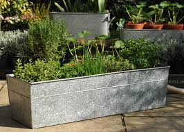 Galvanized Trough Planter by Herbs For Urbs Woolly Green