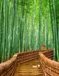 nice bamboo forest wall mural gallery home design bamboo forest wall mural bamboo forest wall mural