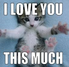 I Love You This Much Meme - kitten i love you this much quickmeme