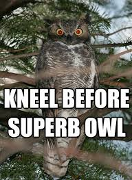 Superb Owl Meme - superb owl eurokeks meme stock exchange